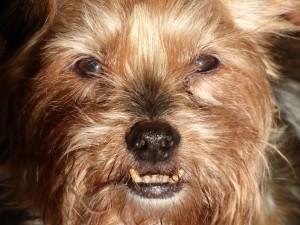 dog-1121472_960_720